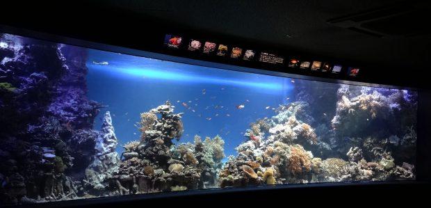サンシャイン水族館でサンゴの日!サンゴフェスタ