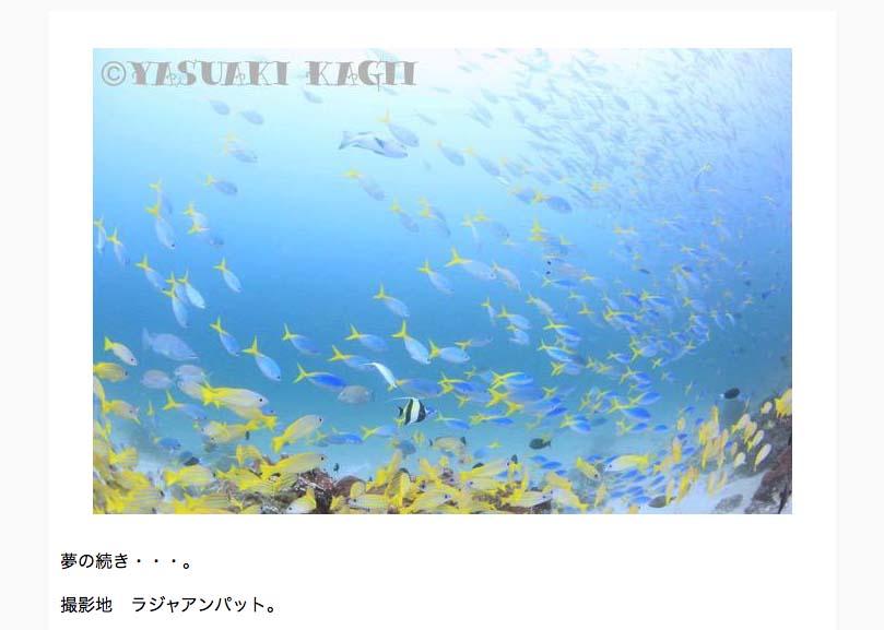 鍵井靖章さんの海中写真が毎日届く! メルマガ「まぐまぐ」