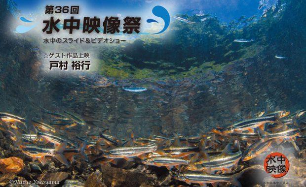 「第36回水中映像祭」江東区文化センターホールで開催