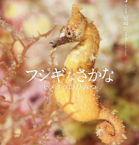 尾崎たまき 写真絵本「フシギなさかな ヒメタツのひみつ」