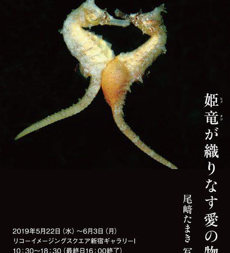尾崎たまき写真展「姫竜が織りなす愛の物語」