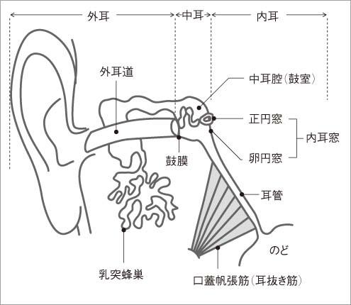 抜き と は 耳
