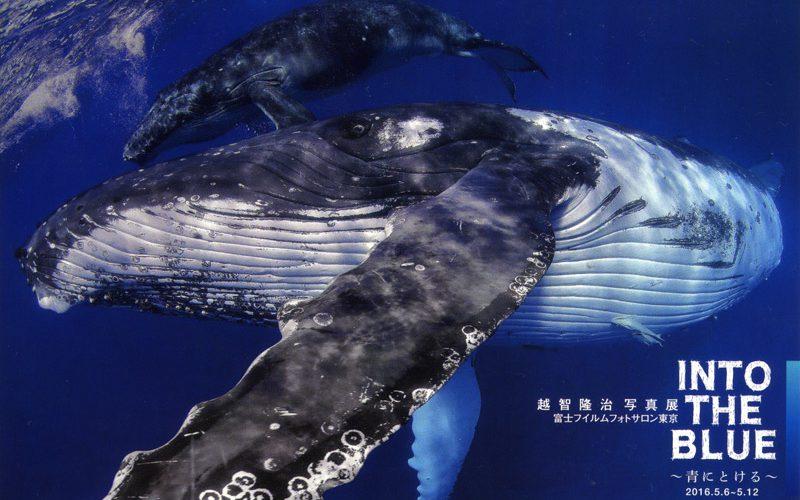 越智隆治写真展 INTO THE BLUE 〜青にとける〜 5/6より富士フィルムフォトサロン 東京で開催