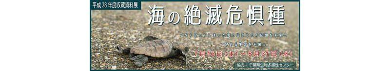 8/31まで「海の絶滅危惧種」千葉・海の博物館で開催中