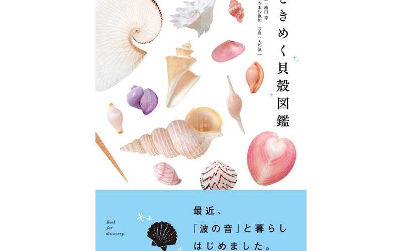 新刊「ときめく貝殻図鑑」貝殻を探すのが楽しくなる!