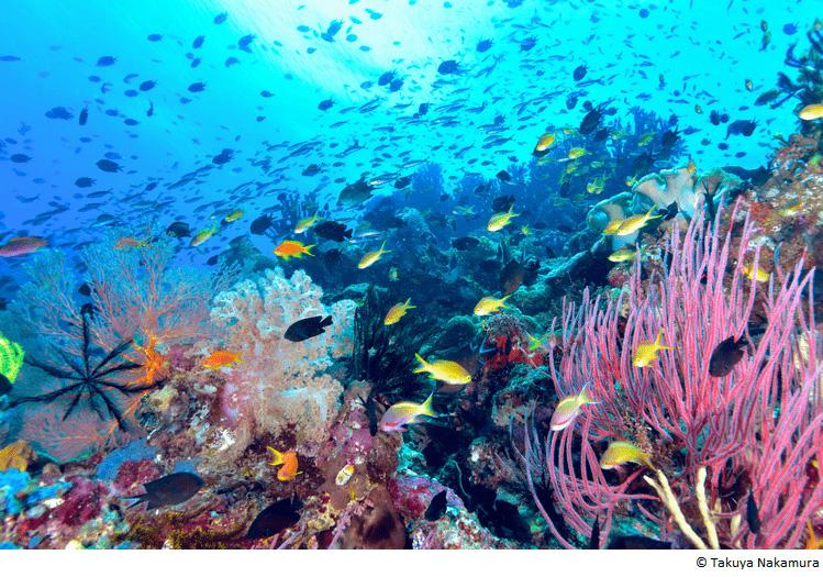中村卓哉トーク&サイン会「パプアニューギニア 海の起源をめぐる旅」