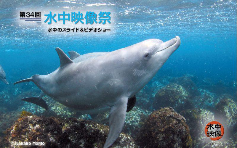 第34回水中映像祭 4月15日開催