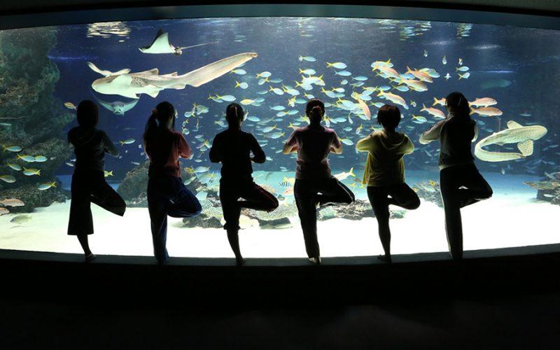 サンシャイン水族館で朝ヨガ