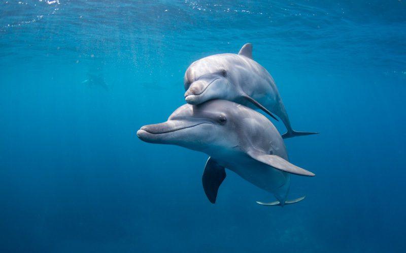 高縄奈々作品展 Tokyo Dolphins -東京の島のイルカたち-