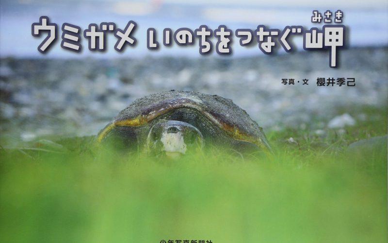 御前崎ウミガメ写真展 ウミガメいのちをつなぐ岬