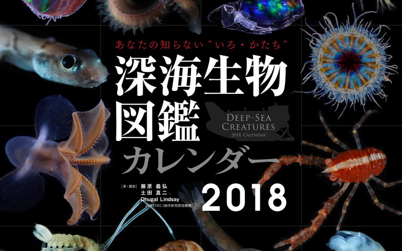深海生物図鑑カレンダー2018