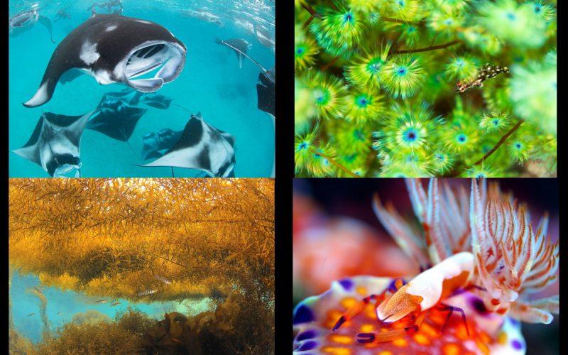 ガイド会 海のシェルパ写真展「ONE LOVE」