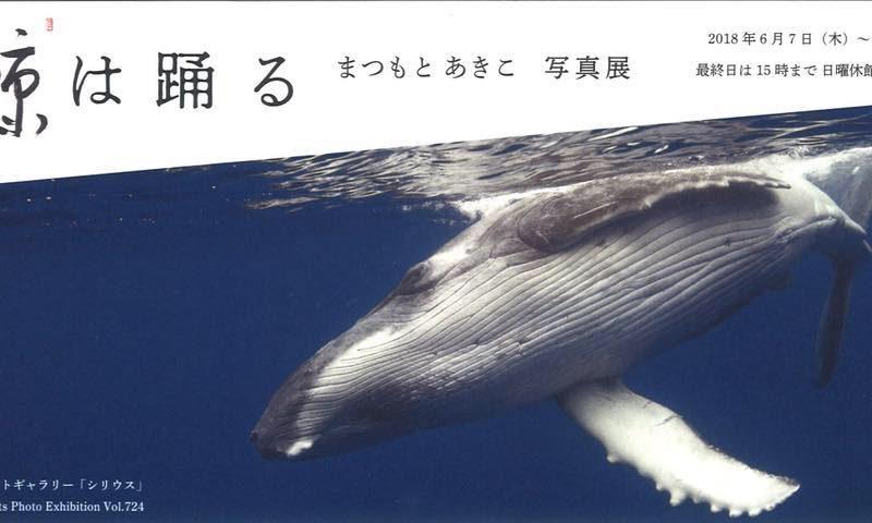 まつもとあきこ写真展「鯨は踊る」