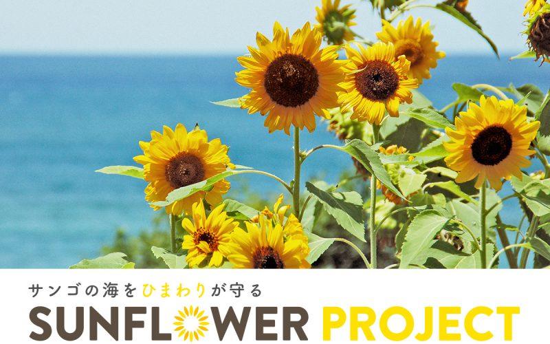 ひまわりが沖縄のサンゴを救う!?サンフラワープロジェクト発足