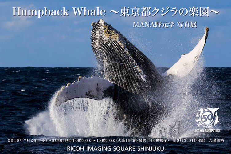 MANA野元学写真展「Humpback Whale〜東京都クジラの楽園〜」