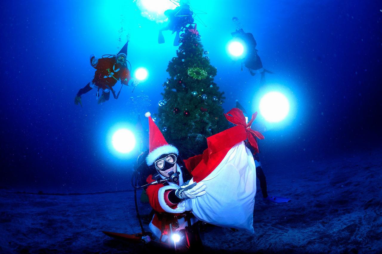 伊豆海洋公園に水中クリスマスツリー! ダイビングでクリスマス気分を味わおう♪