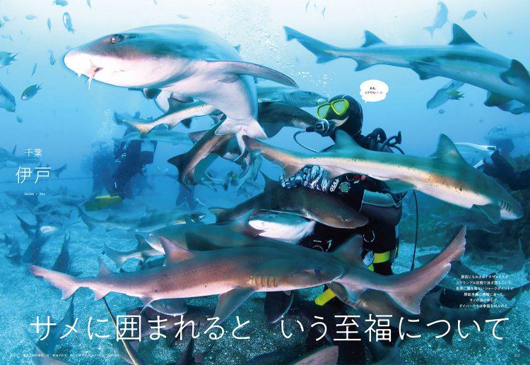 DIVER9月号 大特集「サメと潜る。」