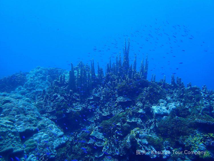 DIVER ONLINE ミクロネシアのおすすめダイビングスポット