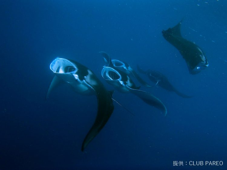 DIVER ONLINE ミクロネシアのおすすめダイビング