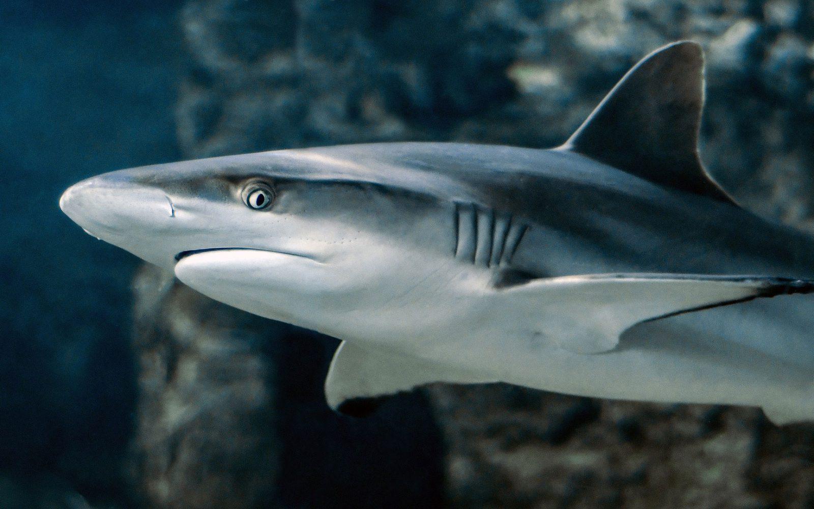 脳みそ サメ の
