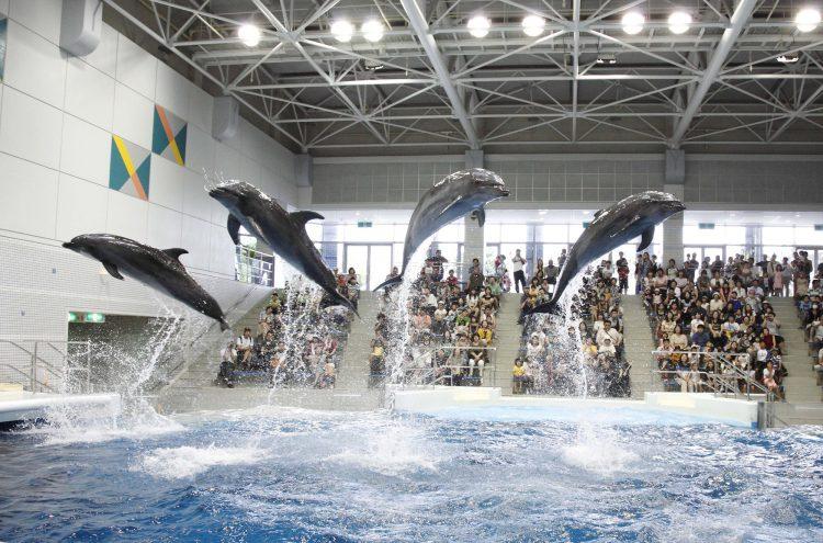 DIVER ONLINE 鹿児島 ダイビング いおワールドかごしま水族館